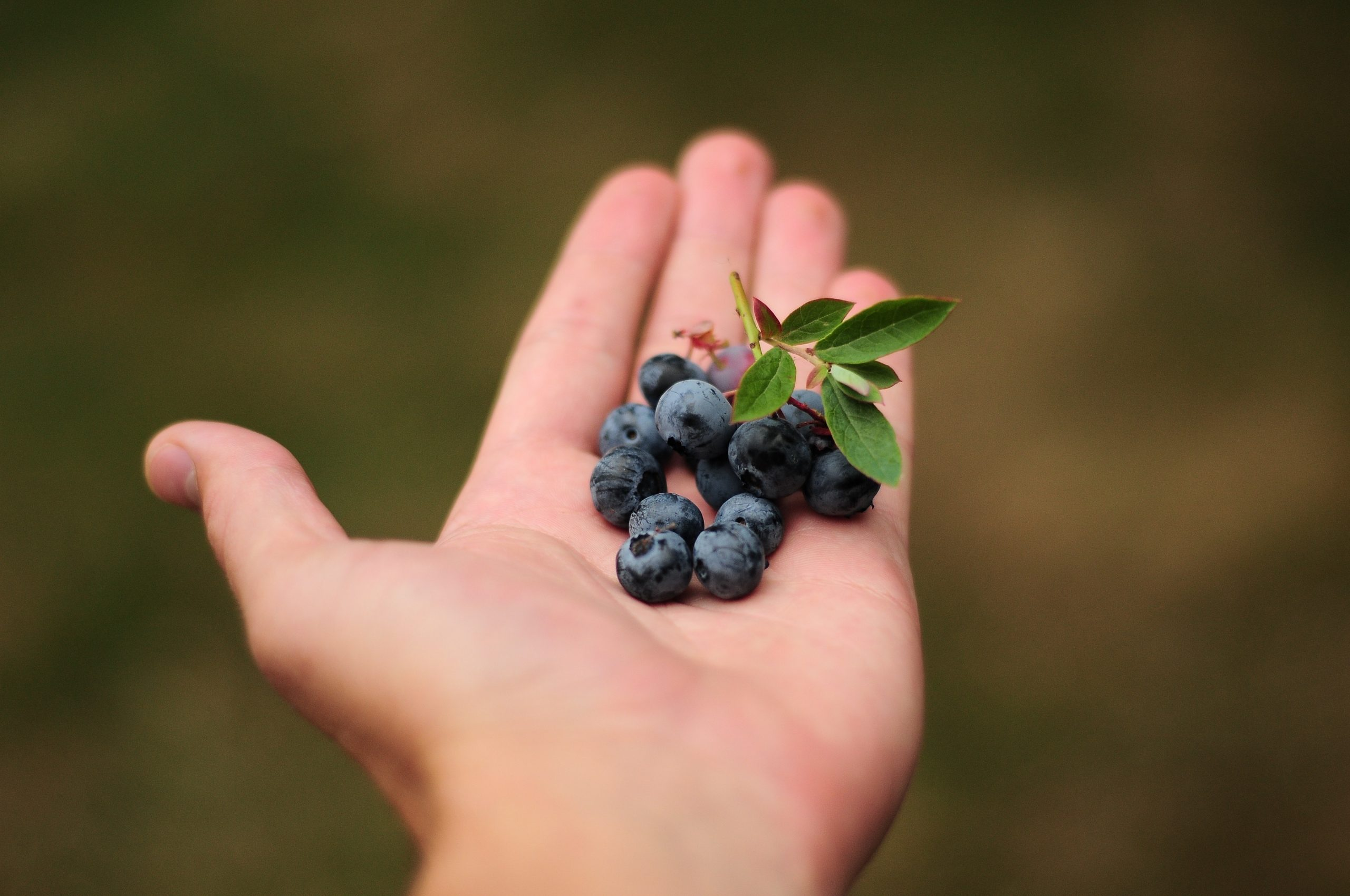 Tavaszi felfrissülés az erdei gyümölcsök erejével!